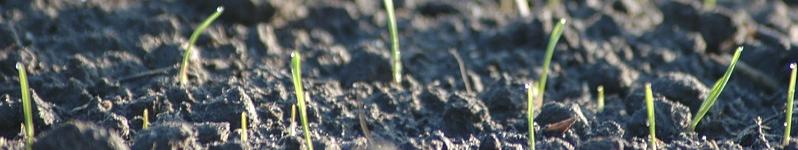 Sage Pastel Evolution SoftwareIntegration software integration depicted by growing seedlings.